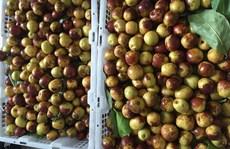 'Sốt' táo Trung Quốc chữa đau đầu (?)