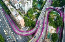 Hoa giấy nhuộm tím đường cao tốc ở Trung Quốc