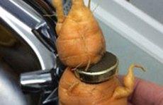 Ông lão tìm thấy nhẫn cưới thất lạc 3 năm giữa củ cà rốt