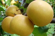 Mua lê Hàn Quốc, bị lừa bằng quả Trung Quốc