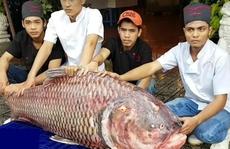 Cá 'khổng lồ' giá cao bao nhiêu cũng hết