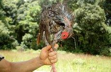 Ám ảnh sau chuyến theo chân thợ săn ở Lâm Đồng