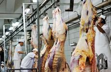 Lo Úc cấm xuất khẩu bò sang Việt Nam