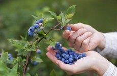 18 siêu thực phẩm giúp tăng tuổi thọ, đẩy lùi bệnh tật