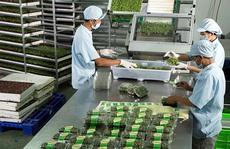 Chỉ doanh nghiệp mới đủ sức kết nối nông dân với thị trường