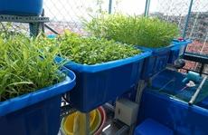 Gia đình Sài Gòn chi tiền triệu trồng rau, nuôi cá trên ban công