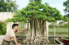 8 cây cảnh Việt Nam giá triệu đô