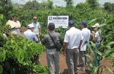 Hỗ trợ nông hộ nhỏ phát triển bền vững