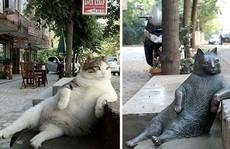 Mèo ú 'bất hủ' ở Istanbul được tạc tượng