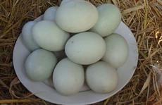 Ai cũng thích trứng vịt trời
