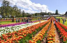 Đi dự lễ hội hoa Tulip lớn nhất Melbourne