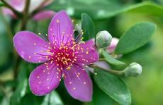 Ai yêu màu tím hoa sim