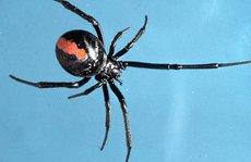 Chàng trai 2 lần bị nhện cắn cùng vị trí vào 'chỗ kín'
