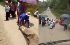 Phụ nữ, trẻ em chặn đường 'xin đểu' tài xế xe chở heo ở biên giới