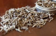 Bạch trà đắt nhất thế giới có gì đặc biệt?