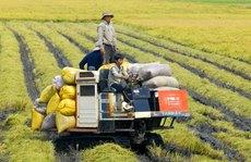 Lấy doanh nghiệp làm 'đầu tàu' nông nghiệp