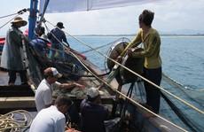 Làm khóm chà trên biển, mỏi tay bắt cá