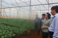 Xóa bỏ tình trạng đội lốt nông sản Lâm Đồng đưa vào TP HCM