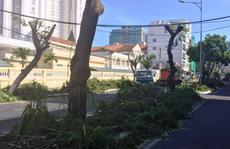 TP Nha Trang đào hàng loạt cây xanh mở rộng đường