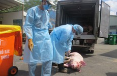 Cán bộ thú y chỉ 'chủ quan, sơ hở' trong vụ 3.750 con heo bị tiêm thuốc an thần!