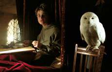 'Harry Potter' khiến loài cú ở châu Á gặp nguy hiểm