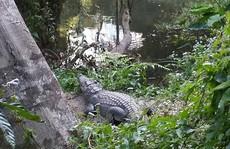 Trả giá đắt vì tạo dáng chụp ảnh 'tự sướng' với cá sấu