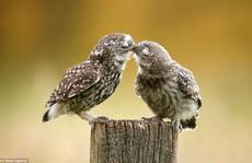 Chùm ảnh những nụ hôn nóng bỏng khắp thế giới ngày Valentine