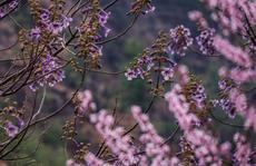 Dzong, Tiger Nest, hoa đào, lễ hội và... hạnh phúc