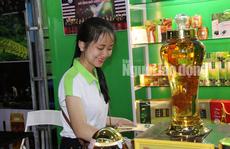 Sâm Ngọc Linh gần 100 triệu/kg vẫn đắt như tôm tươi