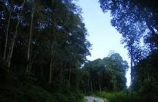 Dồn sức giữ rừng (*): Lao vào 'cuộc chiến'