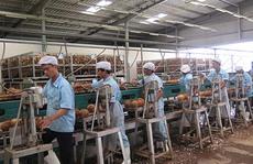 Mỹ rút khỏi TPP: Việt Nam mất cơ hội nhưng ít ảnh hưởng trực tiếp