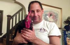 Giải cứu... con gà sống ngoài vòng pháp luật