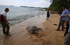 """Bỏ ra 25 triệu đồng mua rùa """"khủng"""" suýt lên bàn nhậu để thả về biển"""