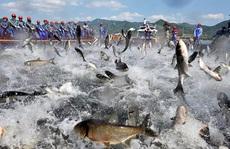 Sự thật 'kinh hoàng' của lợn, cá, tôm... từ Trung Quốc