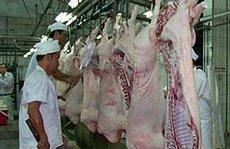Tạo điều kiện tối đa cho xuất khẩu thịt heo