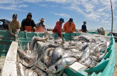 Loài cá 'yêu' ầm ĩ đến mức… làm cá heo bị điếc