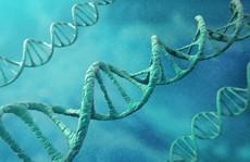 Đồng tính luyến ái do... gene