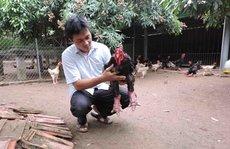 'Vua gà' Đông Tảo ở Hưng Yên