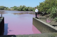 Hồ nước màu tím được xử thế nào?