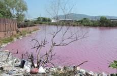 Hồ nước thải màu tím, bốc mùi thối là do tảo nở hoa
