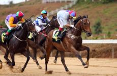 Sân chơi mới cho người mê đua ngựa