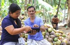 Nông dân trồng dừa qua thiết bị di động