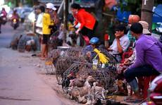 Tỉ phú nuôi gà cũng phá sản