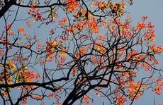 Đẹp mê hồn rừng cây thay lá