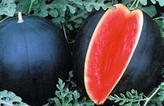 Lý do khiến loại dưa hấu này có giá lên tới 130 triệu đồng/quả?
