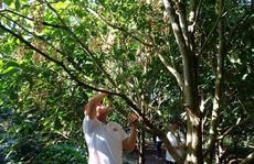 Hết mùa trái cây, nhà vườn vẫn 'chém ngọt' du khách