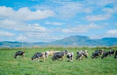 Hành trình ra mắt sữa tươi 100% organic tiêu chuẩn châu Âu đầu tiên tại Việt Nam