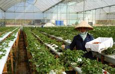 'Quốc tế hóa' lĩnh vực nông nghiệp