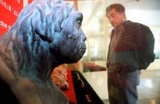 Hộp sọ tìm thấy ở Trung Quốc có thể viết lại lịch sử tiến hóa?