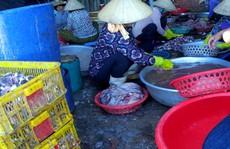 Kiên quyết đóng cửa cơ sở chế biển hải sản dùng hóa chất